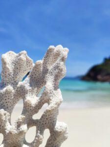 Koralle am Strand