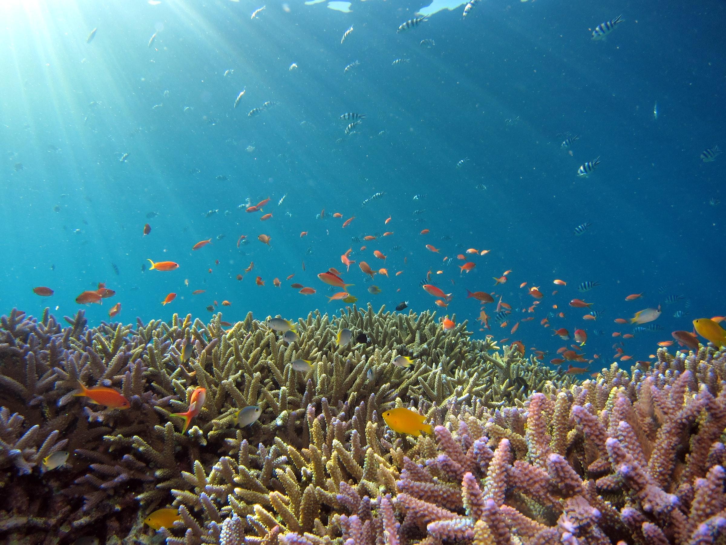 Das Meer vor der Insel Okinawa